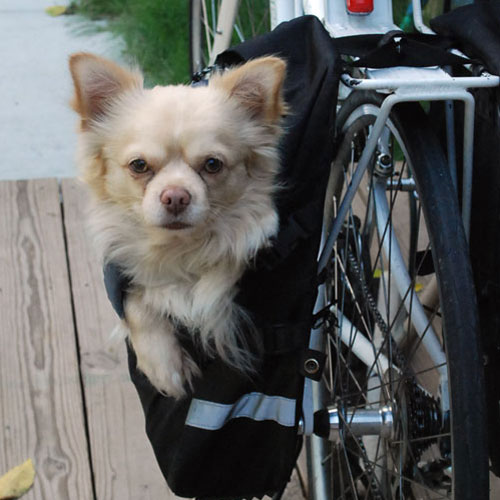My Dog Loves Riding Bikes